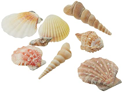 amazon com creative hobbies sea shells mixed beach seashells