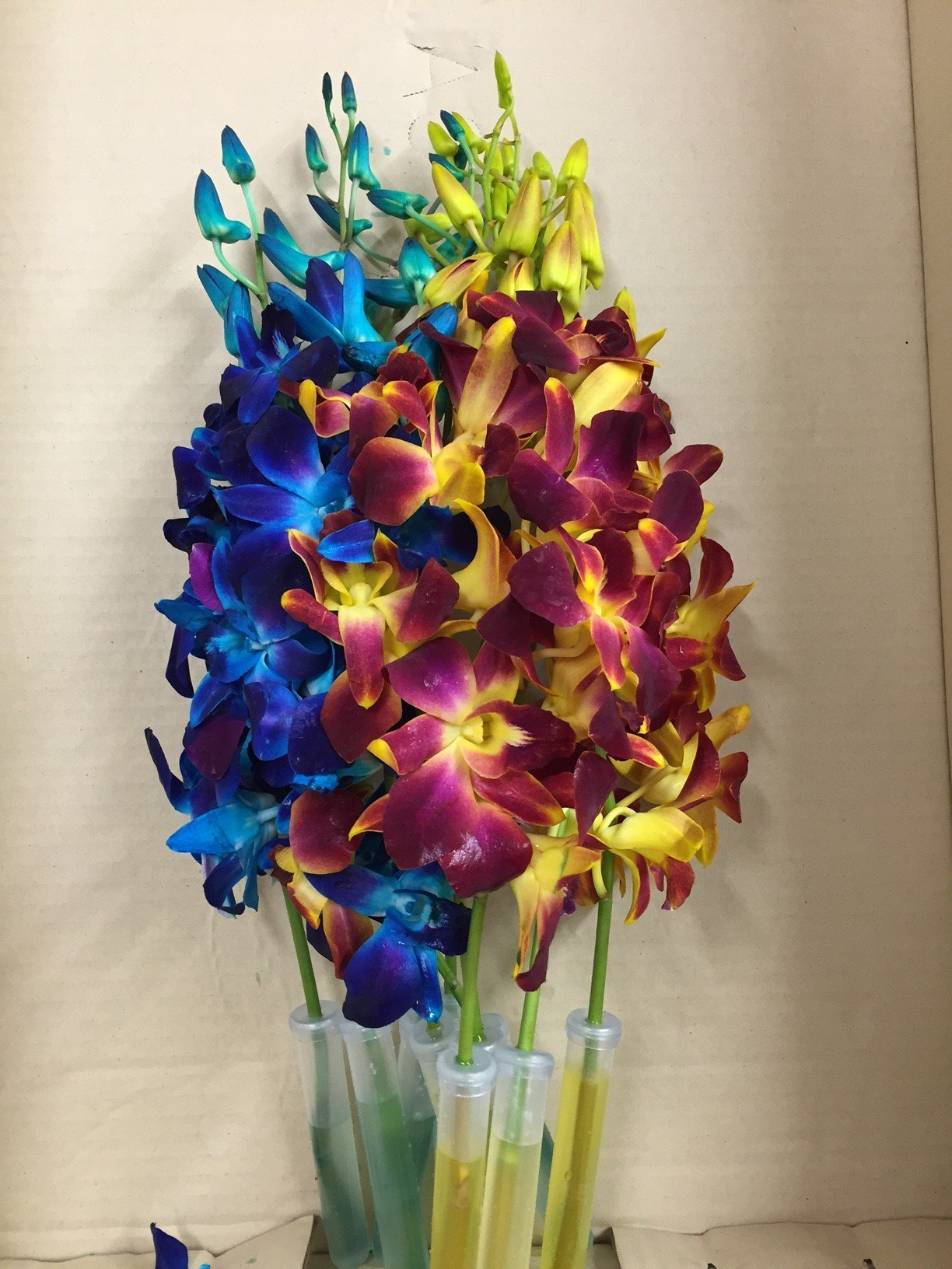 Blue Dyed Dendrobium with Yellow Dyed Dendrobium Orchid by eflowerwholesale