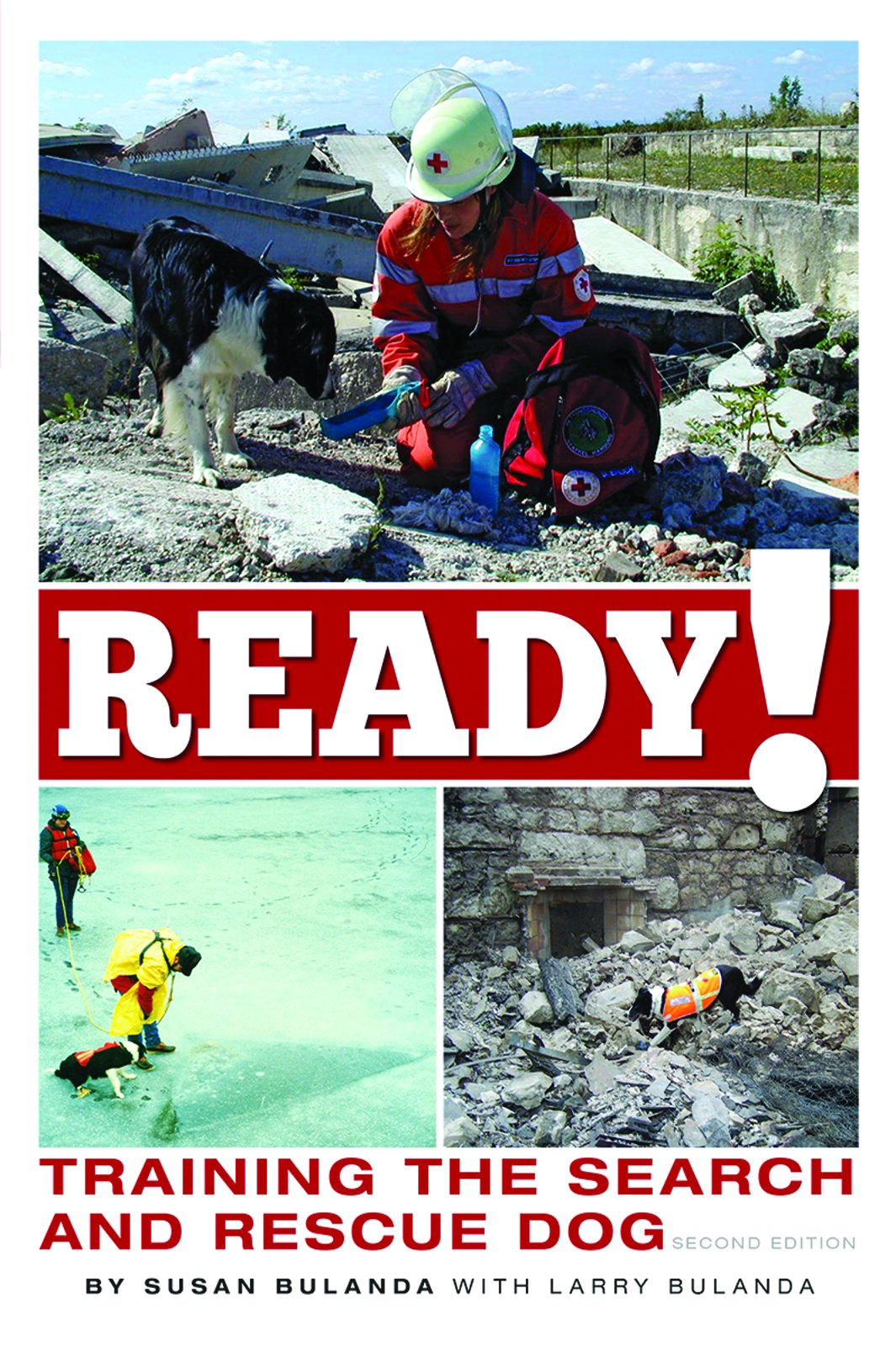 Ready Training Search Rescue Dog