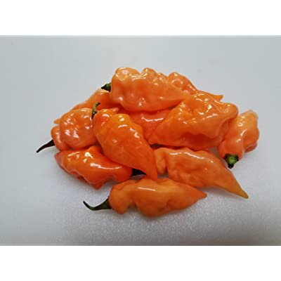 Habanada Pepper 10+ Seeds : Garden & Outdoor