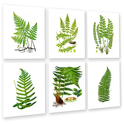 Amazon.com: Fern Botanical Wall Art Unframed Set of 6 Home Decor Art ...