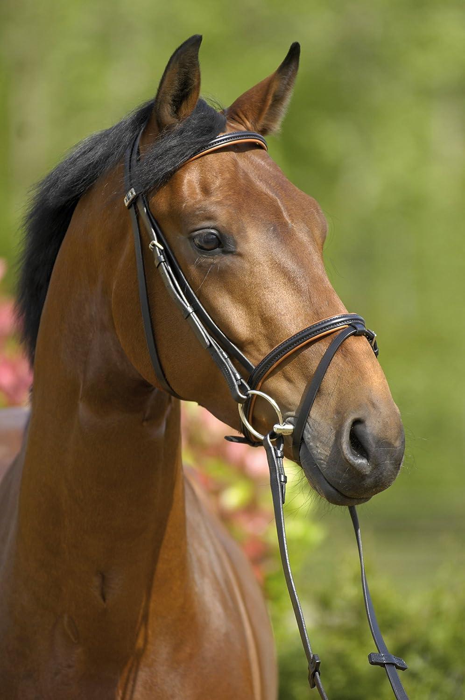 Stübben Trensenzaum 3000 Limerick Pony - havanna - kombiniertes Reithalfter