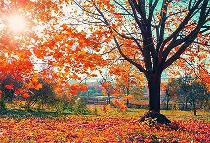 Amazon Com Lfeey 7x5ft Fall Photo Backdrop Idyllic Countryside Nature Scene Wallpaper Autumn Tree Fallen Leaves Photo Background For Photographers Photo Studio Props Camera Photo
