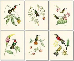 Vintage Hummingbird Art Prints - Wall Decor - (Set of 6) - 8 x 10 - Unframed