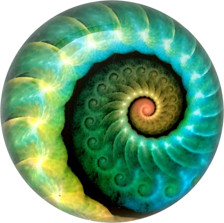 Nautilus Art Under Glass Paperweight (Ocean)