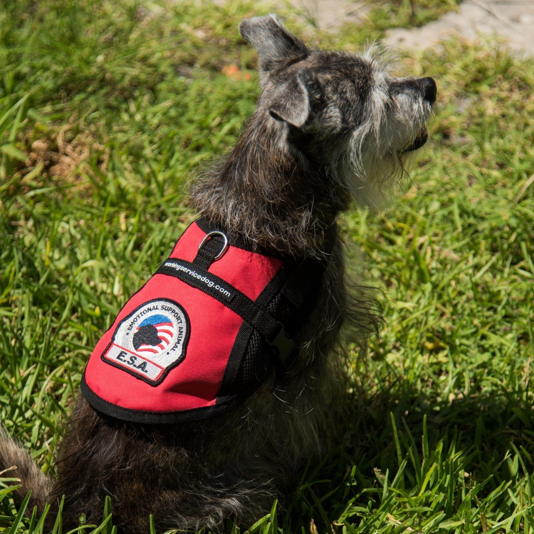 Premium Small Dog Emotional Support Dog ESA Mesh Vest (19'' - 22'' Girth (S), Red)