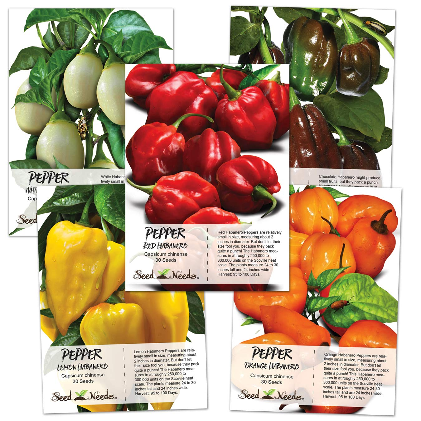 Seed Needs, Habanero Seed Collection (5 Individual Packets) Non-GMO by Seed Needs