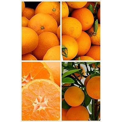 Homegrown Orange Seeds, 20, Clementine Mandarin : Garden & Outdoor