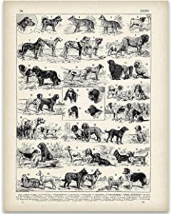 Antique French Dog Breeds Illustration - 11x14 Unframed Art Print - Perfect Vet Clinic Decor or Gift Under $15 to Dog Lovers