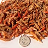 """Freeze Dried Red Shrimp 1/2"""" to 1&1/4"""" for all Tropical Fish, Koi, Turtles. Aquatic Foods Freeze Dried Tropical Fish Foods"""