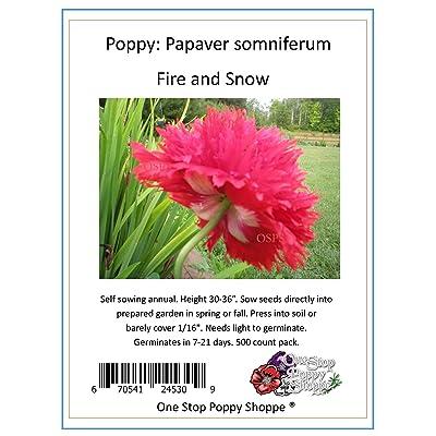 500 Poppy Flower Seeds. Fire N Snow Papaver somniferum. One Stop Poppy Shoppe Brand. : Garden & Outdoor