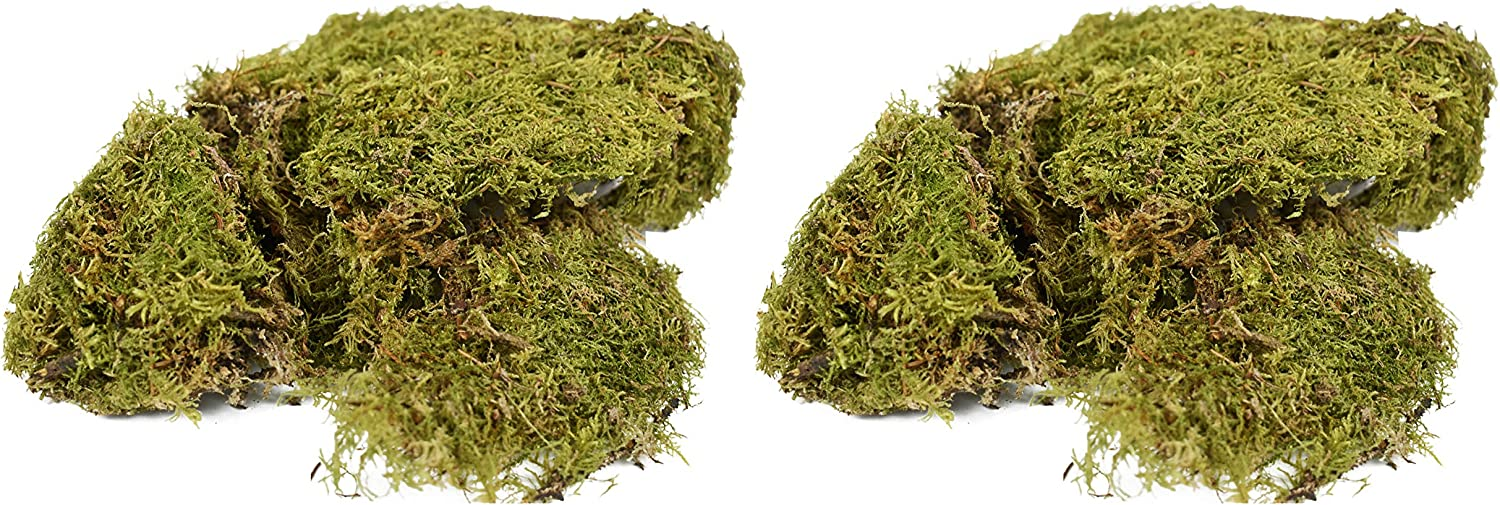Set of 2 Bags of 4-oz Natural Sheet Moss! Perfect for Terrariums, Crafting, Decorating and Indoor Plants! (2 Bags)