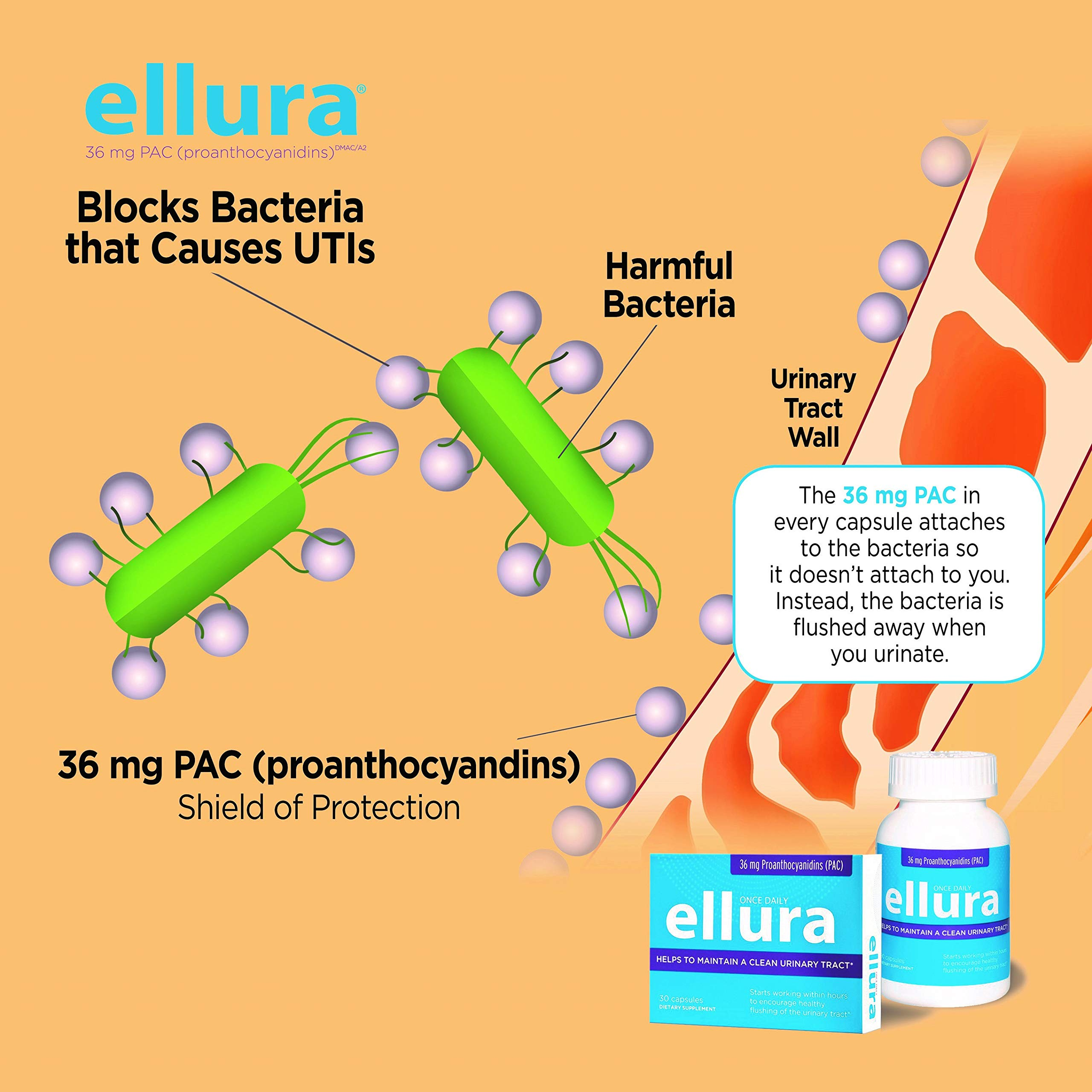 ellura 36 mg PAC DMAC/A2 (90 Caps Bottle), Natural, Medical-Grade Cranberry Supplement to Prevent UTIs (Urinary Tract infections). Trōphikōs, LLC, Maker of ellura. by ellura (Image #4)