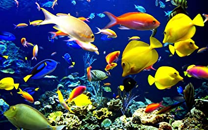 Avikalp Exclusive Awi3159 Tropical Fish Underwater World Sea Ocean Full Hd Wallpapers For Walls 4