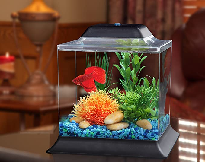 Kollercraft API Betta Kit Cube Fish Tank, 1,5 galones: Amazon.es: Productos para mascotas