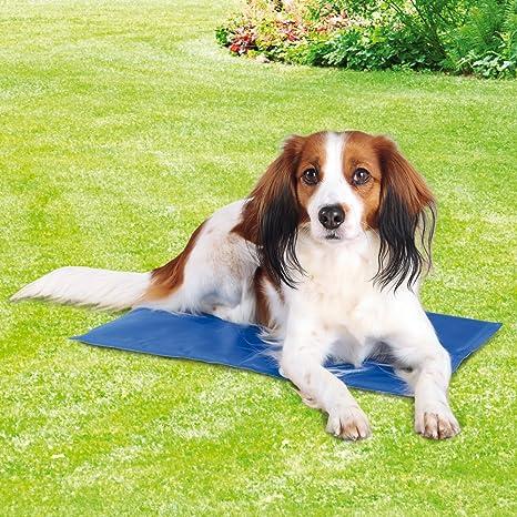 Trixie 28686 Alfombrilla Refrescante, 90 x 50 cm, Azul: Amazon.es: Productos para mascotas