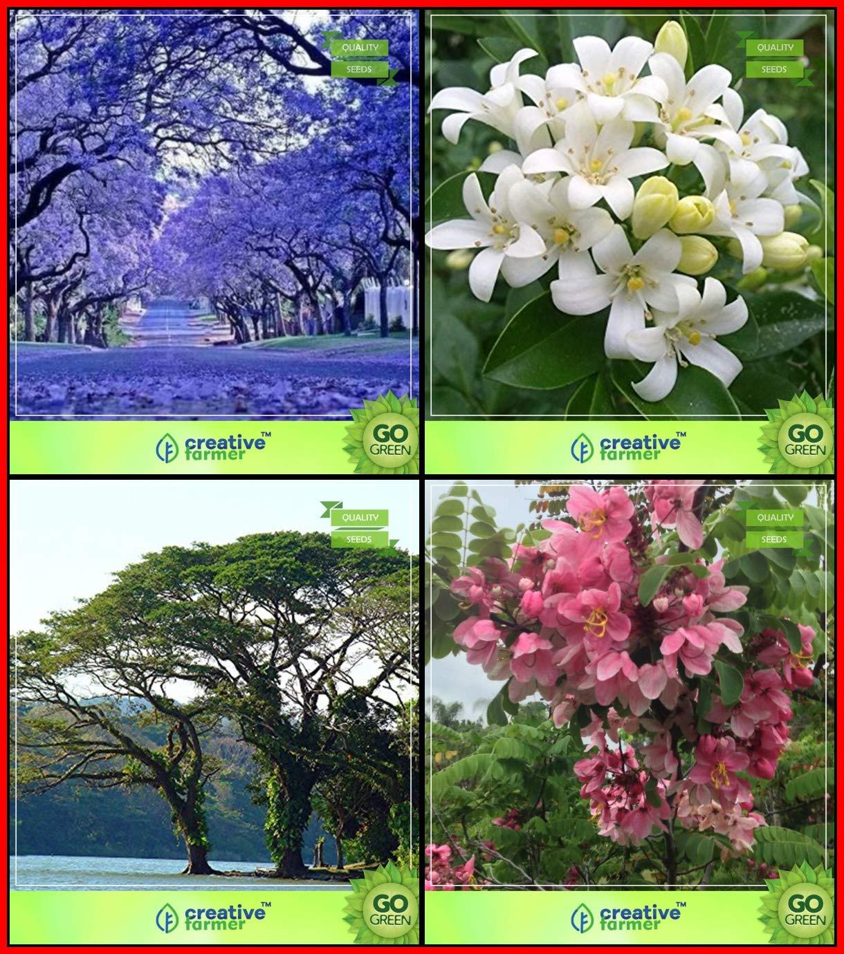 Creative Farmer Seeds And Plants Combo Tree Seeds Blue Jacaranda