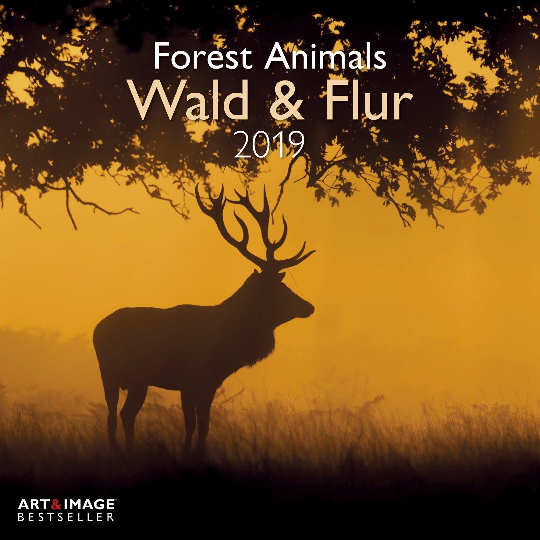 Wald & Flur 2019 Broschürenkalender: Forest & Meadow Animals (Allemand) Calendrier – 1 mai 2018 teNeues Calendar & Statio B077ZH997F Tiere / Jagen / Angeln Schießen