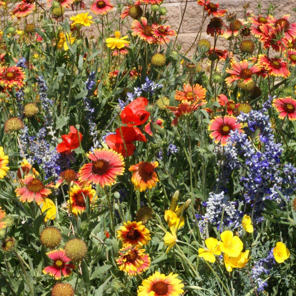 Outsidepride Dryland Wild Flower Seed Mix - 1 LB