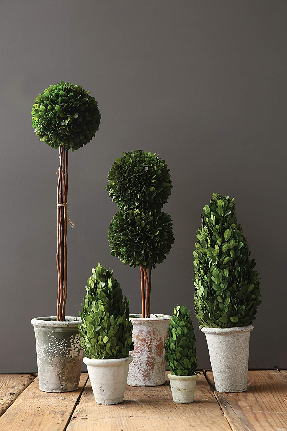 Boxwood topiary in clay pot for French farmhouse and European country style spaces.