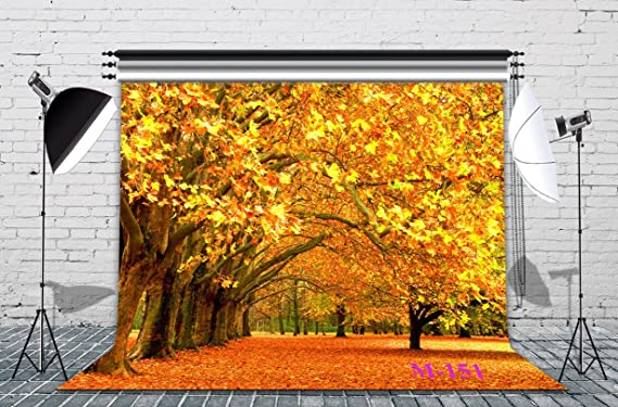 LB Fall Backdrop for Photography 9x6ft Vinyl Redwood in The Autumn Forest Nature Scenery Background for Portraits Photo Booth Backdrop