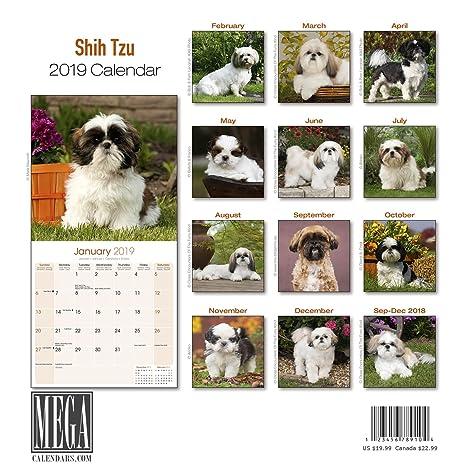 Amazoncom Shih Tzu Calendar 2019 Dog Breed Calendar Wall