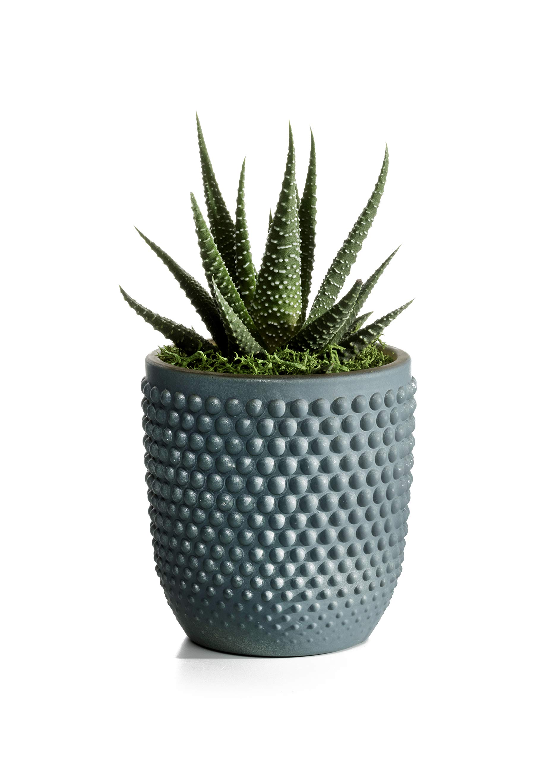 Live Succulents in Blue, Teal, and Grey Ceramic Containers Set of 3, From Hallmark Flowers by Hallmark Flowers (Image #4)