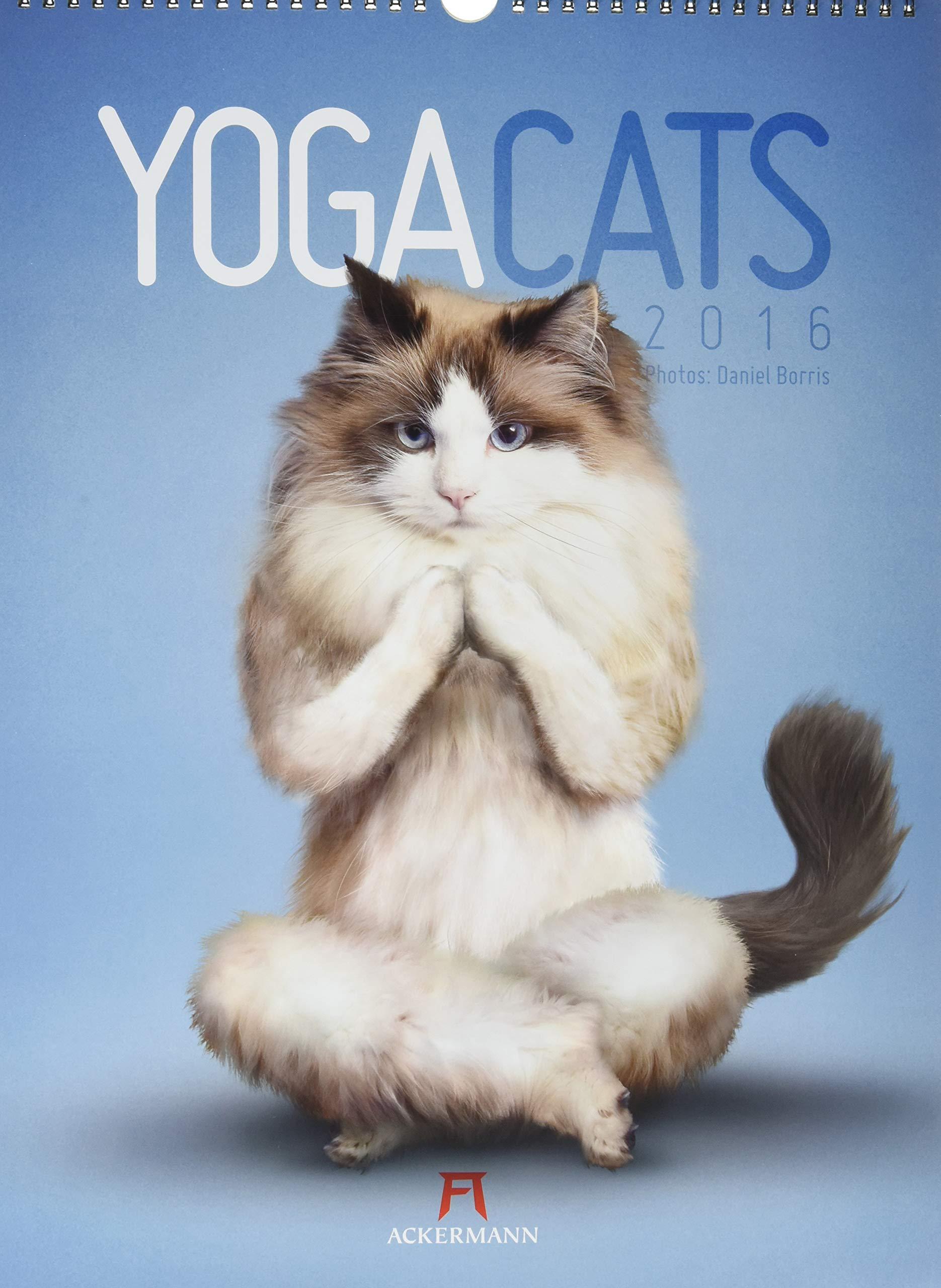 Yoga Cats 2016: 9783838416922: Amazon.com: Books