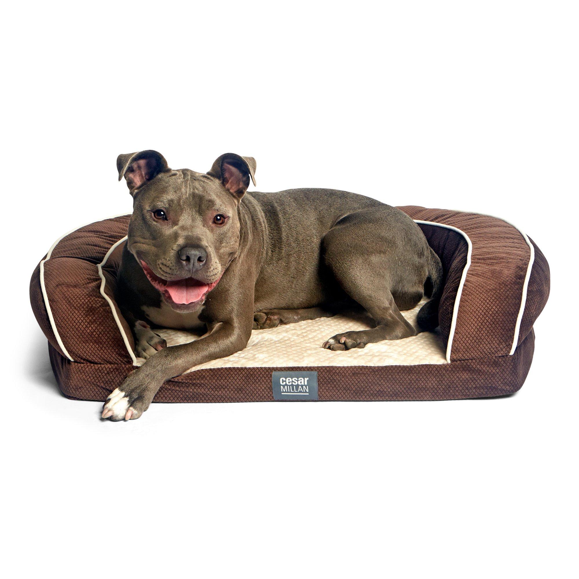 Cesar Millan Ortho Bliss Dog Bed by Cesar Millan