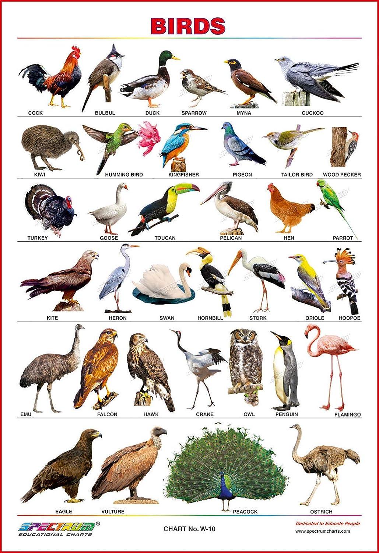 Spectrum Educational Large Wall Charts Set Of 5 Marathi Mulakshare Wild Animals Domestic Animals Birds Flowers Amazon In Office Products