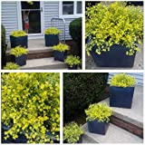 CATTREE Artificial Shrubs Bushes, Plastic Fake
