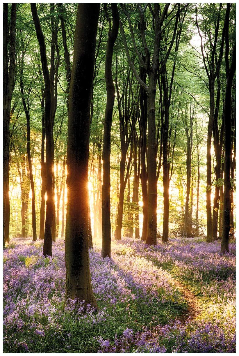 Blaues Hasenglöckchen Wald Wallario Maxi-Poster 61 x 91,5 cm mit Fensterrahmen