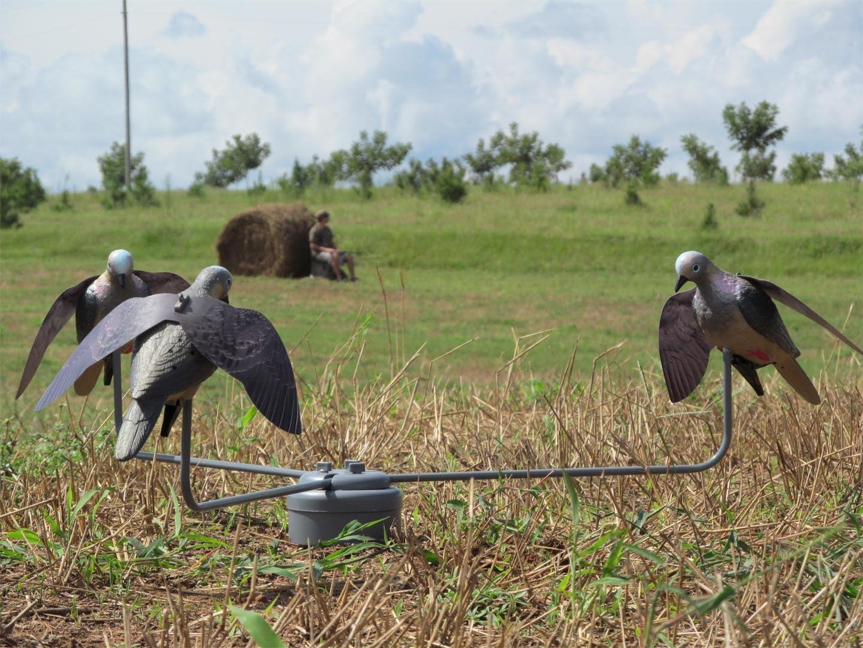 Hunter Edge Dove Decoy Feeding Frenzy