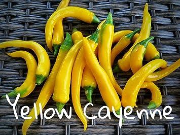 25+ Yellow Cayenne Pepper Seeds