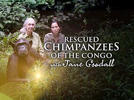 Watch Rescued Chimpanzees of the Congo with Jane Goodall ...