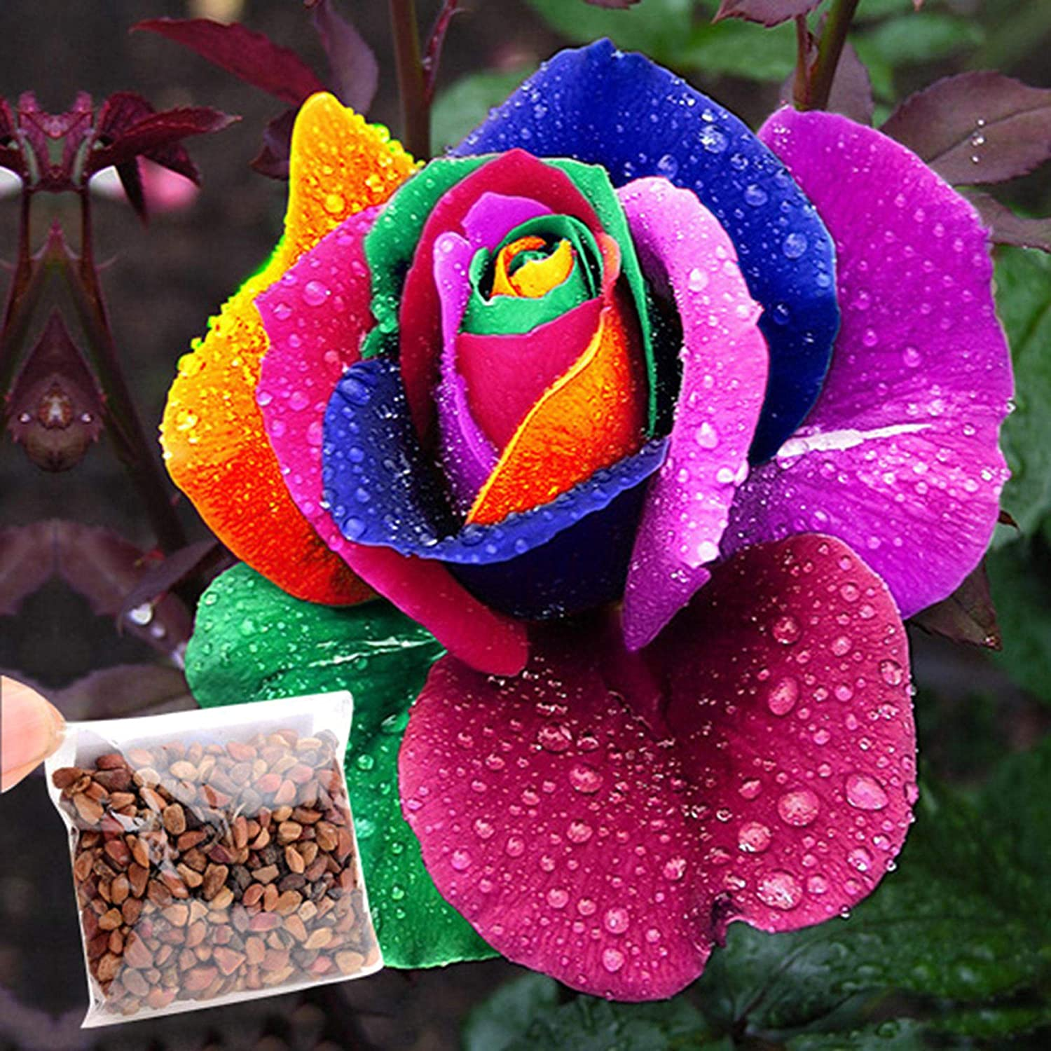 Cravog Pack Of 500 Rose Seeds For Beautiful Rainbow Coloured