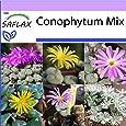 SAFLAX - Conophytum Mix - 40 semillas - Conophytum Mix
