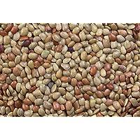 500 Horse Gram Bean Seed,(Indian Kulthi) Macrotyloma uniflorum- Organic,Utreated