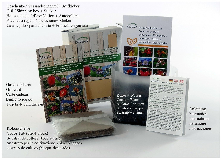 Euphrasia officinalis 200 Samen Geschenk Set Heilpflanzen SAFLAX Augentrost