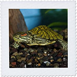 3dRose qs_84061_2 Ornate Red-Ear Slider Turtle NA02 DNO0772 David Northcott Quilt Square, 6 by 6-Inch