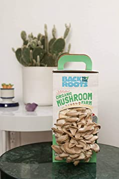 Back to the Roots ~ Pearl Oyster Mushroom Kitchen Garden