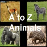 AtoZ Animals