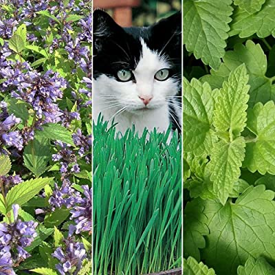 Cat Plant Seed Collection #1-3 Variety Seed Pack of Plants for Your Cat - Catnip, Catmint, Cat Grass - FROZEN SEED CAPSULES - The Very Best in Long-Term Seed Storage : Garden & Outdoor