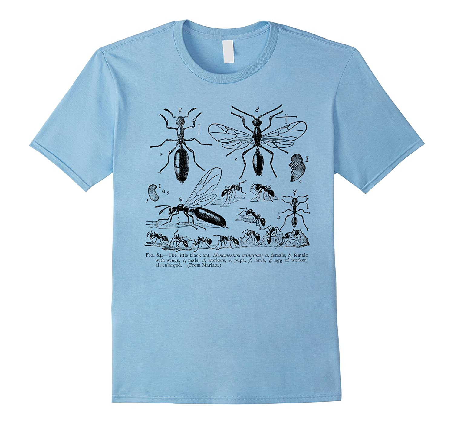 Vintage Entomology Myrmecology Black Ant Tee T-shirt-CD