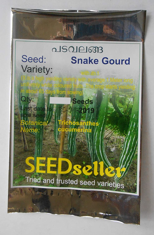 10 seeds Pumpkin Snake Squash