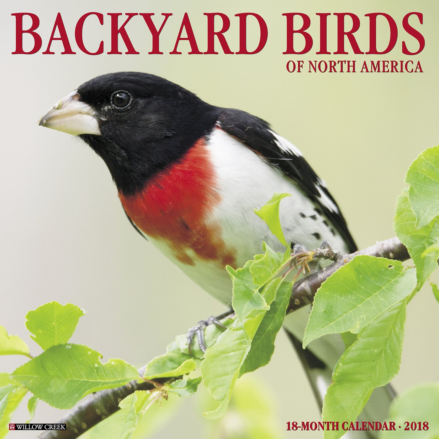 backyard birds of north america 2018 calendar willow creek press