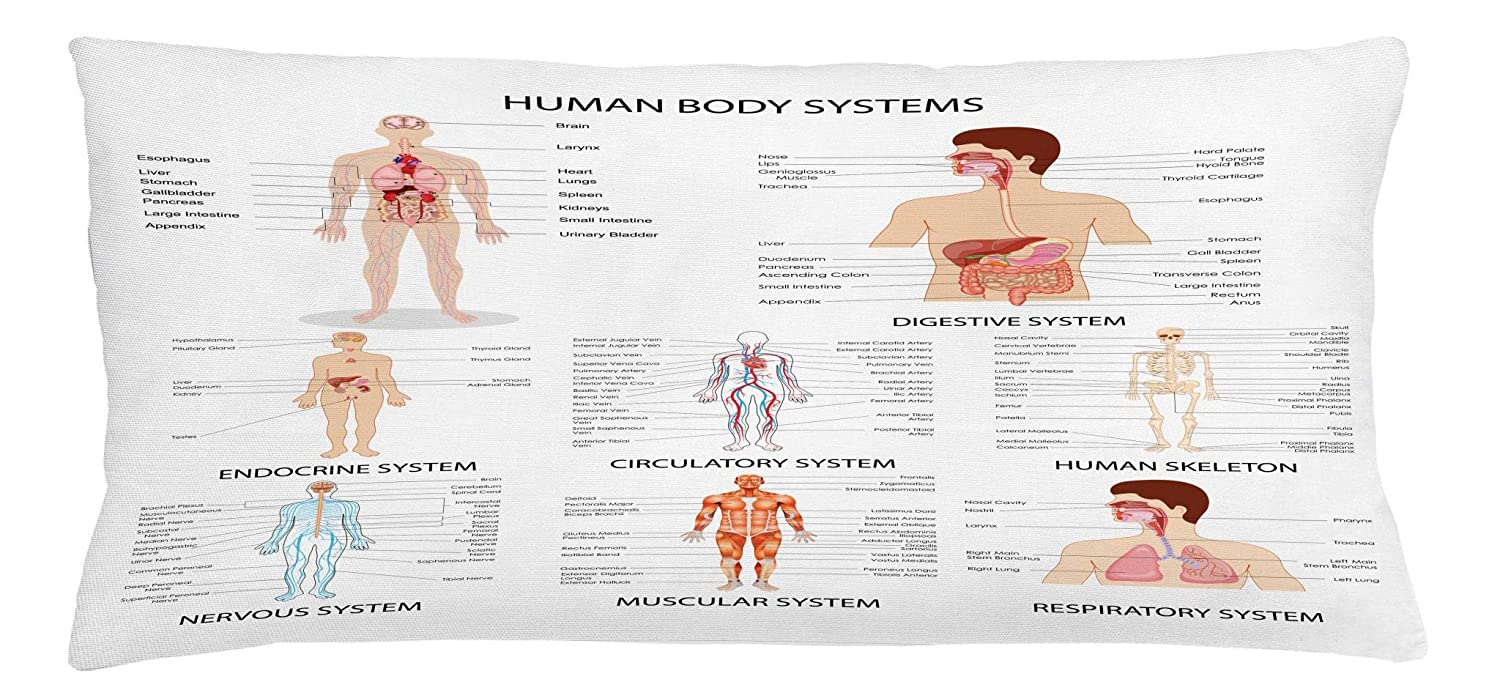 Amazon Ambesonne Human Anatomy Throw Pillow Cushion Cover