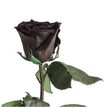 Geliebte Infinity Rose haltbar 3 Jahre konservierte Rose die eine Ewigkeit @TE_34