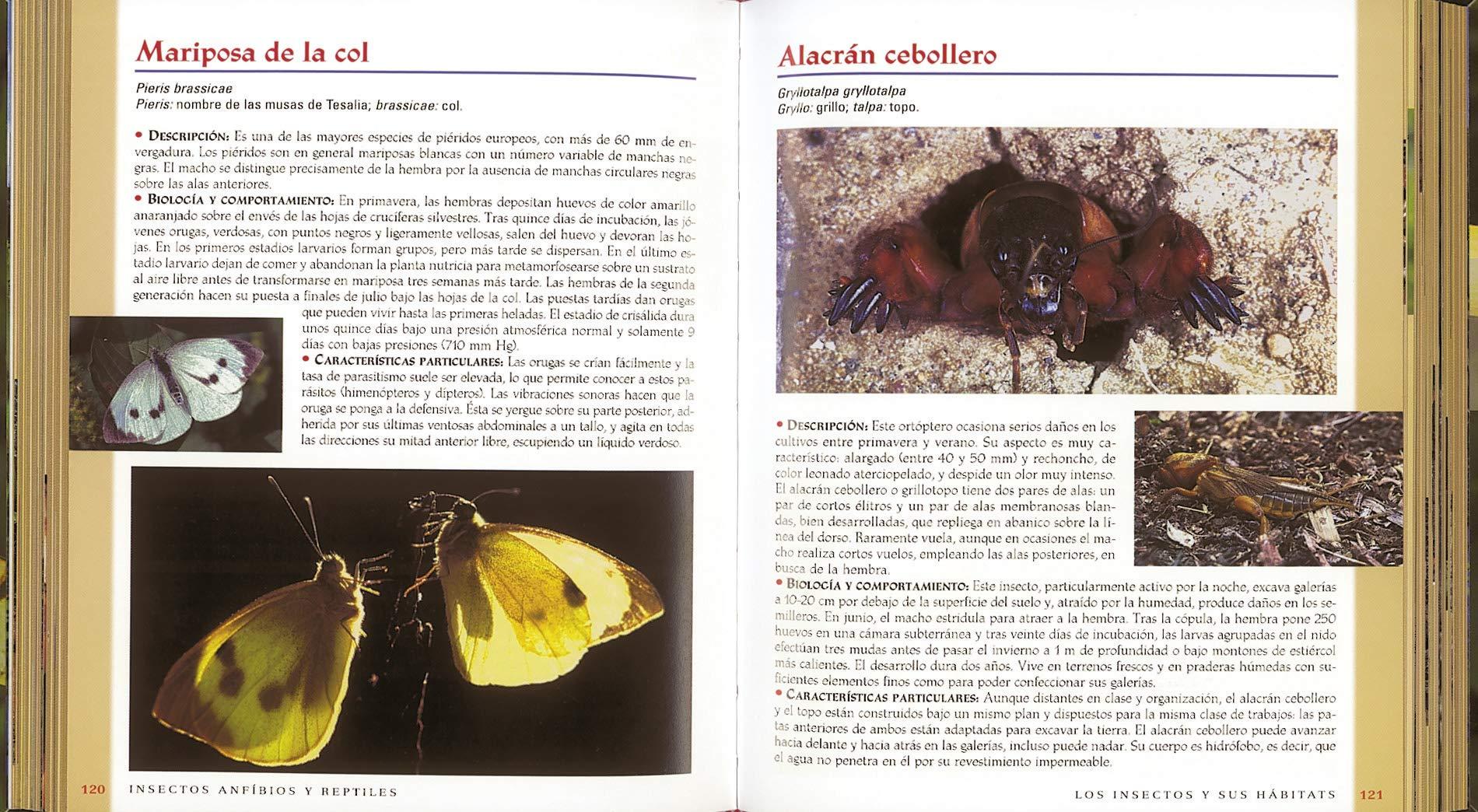 Insectos, Anfibios y Reptiles (Vida verde): Amazon.es: Varios Autores: Libros