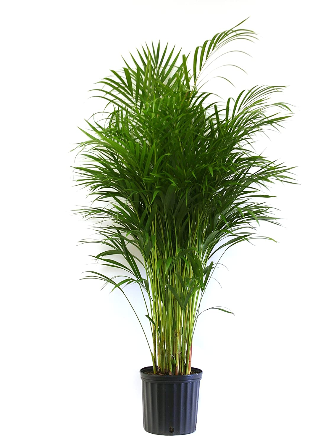 100 Small House Plant Small Plants Plant For Office